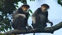 Vietnam city puts up posters to protect langurs