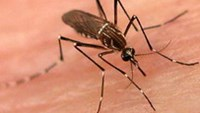 Expert warns of mutant dengue fever in Vietnam as 4 die