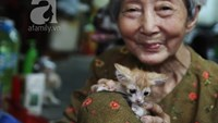 Vietnamese woman brings home stray cats and dogs