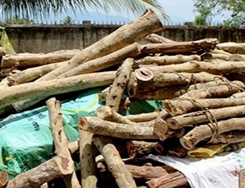 Man fined $16,000 for illegal wood trade