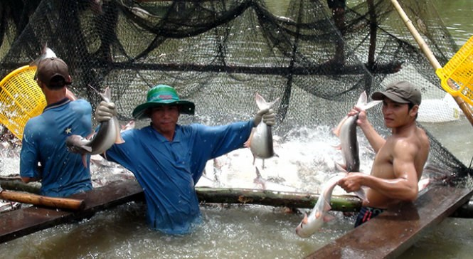 A fish farm on the Mekong River in Vietnam. Photo credit: Tuoi Tre
