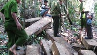 Vietnam rangers accused of helping loggers in protected forest