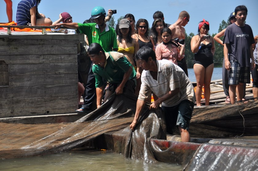 Tourists watch as two farmers in the Mekong Delta's An Giang Province pull up nests of fish during a seasonal flood tour. Photo: Tien Trinh