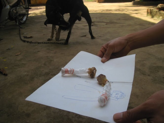 Two pieces of dog bait collected in Dak Nong Province. One was believed to kill a 22-month-old boy in the province on November 4, 2014 after he mistook it for a lollipop. Photo credit: Tuoi Tre
