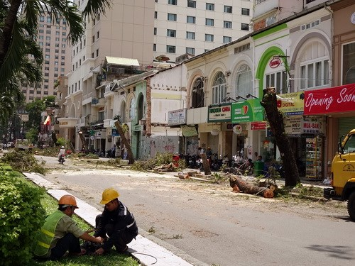 Trees being felled on October 2, 2014 as workers prepare to convert Nguyen Hue Street in Ho Chi Minh City into a pedestrian promenade. Photo: Doc Lap