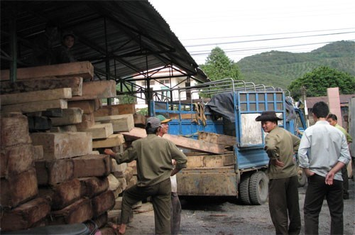 Forest rangers in Lam Dong Province in an illegal logging haul. Photo: Lam Vien