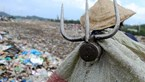 Life at a landfill: Waste pickers try to dig their future out of poverty in Da Nang