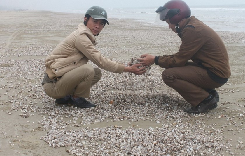 Men collect shells of dead clams along the coast in Ha Tinh Province. Photo: Quang Dung
