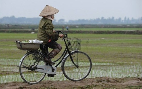 Vietnam restricts takeover of farmlands for other purposes