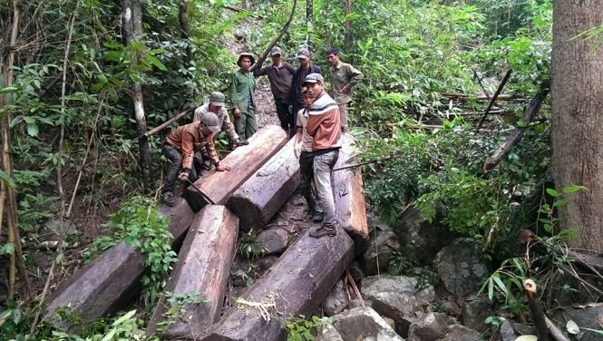 A photo posted on the Facebook page of Vu Duc Loc in Gia Lai Province shows men standing over logs of wood from local forest