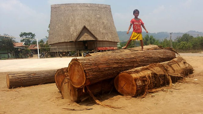 A boy stands on logs of wood that a village in the Central Highlands seized from loggers on April 18, 2015. Photo credit: Tuoi Tre