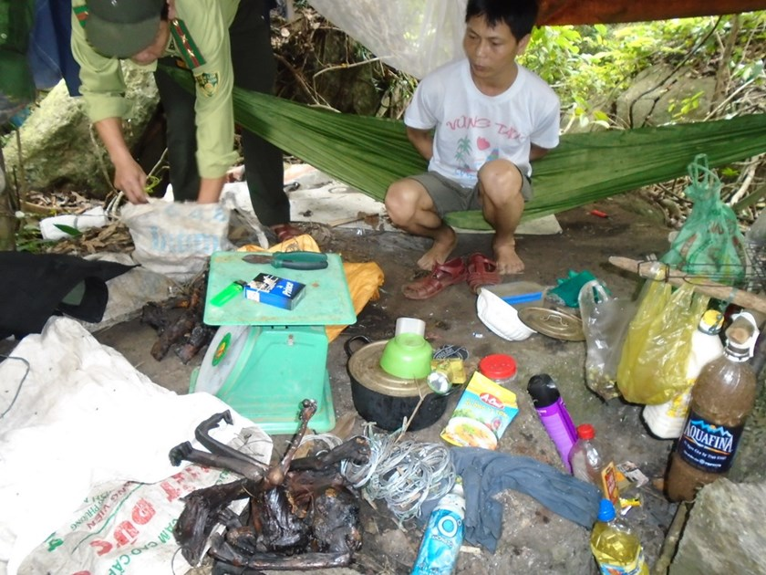 Vi Van Son is arrested with many traps and parts of endangered red-shanked douc langur inside Son Tra natural reserve in Da Nang. File photo
