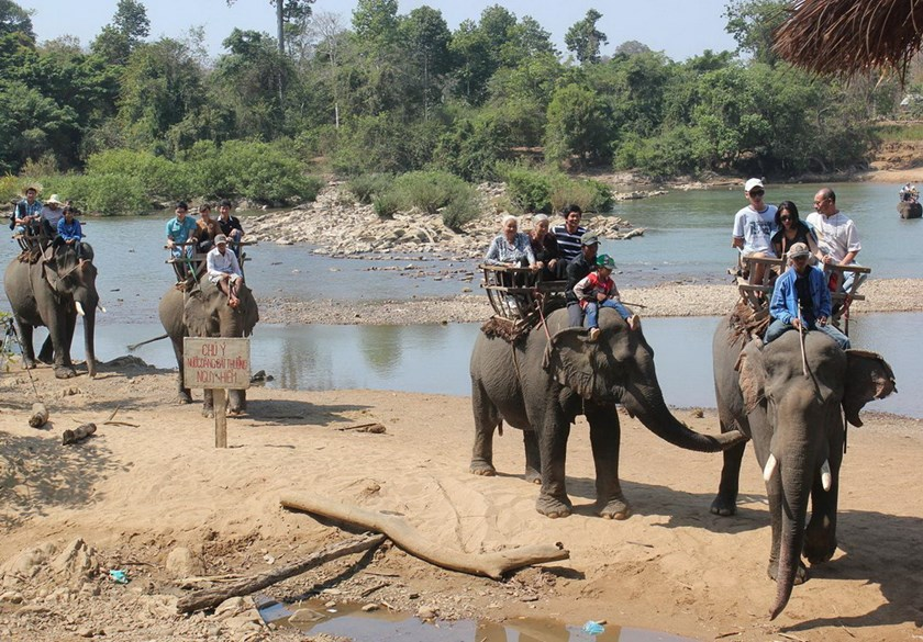 Elephants in Dak Lak carry tourists all day and have to find food at night around a small area limited by locals' farmland. Photo: Ngoc Quyen