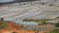 Greenhouses cover a large area of land in Da Lat, which experts blame for diverting rain away and causing regular floods in the city in recent years. Photo credit: Tuoi Tre