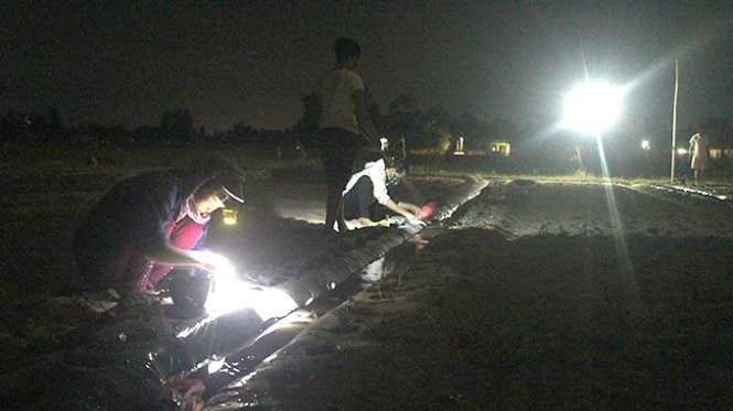 Farmers in Nghe An work on their field at night to avoid the sun. Photo credit: Tuoi Tre