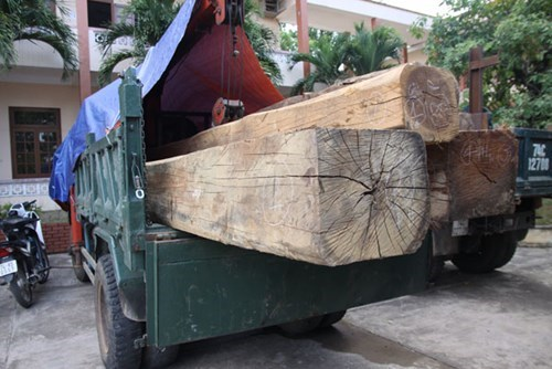 Illegal wood logs police in Quang Tri seized on May 23, 2015. Photo: Nguyen Phuc