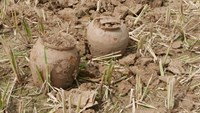 Pottery jars found in a field near the Ho Citadel in Thanh Hoa Province. Photo credit: VnExpress