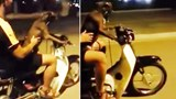 Vietnam man faces fine for letting dog drive motorbike