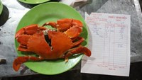 This crab is the center of an overcharging complaint recently brought against a restaurant in Nha Trang. Photo courtesy of the tourist