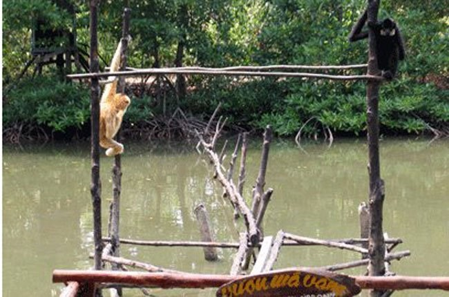 Monkeys inside Can Gio Mangrove Forest in Ho Chi Minh City. Photo credit: Saigon Times Online