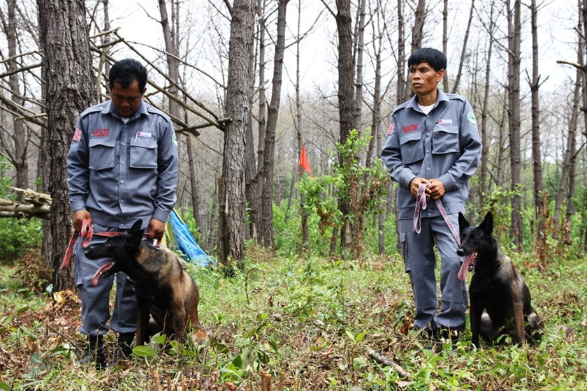 Two detection dogs assist a UXO clearance project in Quang Tri Province in central Vietnam. Photo: Nguyen Phuc