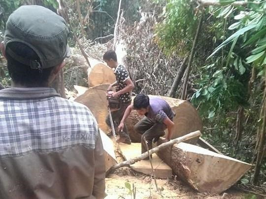 A photo posted on Facebook shows a group of men logging trees in Gia Lai Province. Photo credit: Nguoi Lao Dong