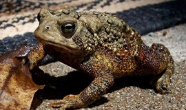Central Vietnam toddler dies after brother feeds her toad eggs