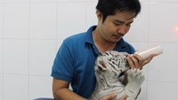 Nguyen Ba Phu, a vet, feeds a white tiger cub at Saigon Zoo at 3 a.m. Photo: Pham Huu