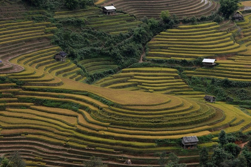 Terrace rice fields in Mu Cang Chai District in the northern mountainous province of Yen Bai. Photo: AFP/Hoang Dinh Nam