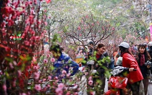 Many families in northern Vietnam decorate houses with peach blossoms during Tet. Photo credit: VnEconomy