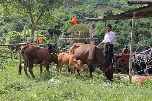Ho E Not, head of a village in central Vietnam, has persuaded everyone to stop drinking to build a better life. Photo: Hoang Tao/VnExpress