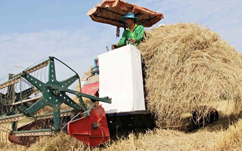 Straw collected after a harvest in the Mekong Delta. Photo credit: Voice of Vietnam