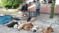 Police in Vinh Long Province caught two men carrying 13 dead dogs on their motorbikes on Wednesday morning. Without certificates of origins, the dogs are supposed to be disposed of as a kind of illegal good. Photo: Thanh Duc