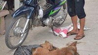 3 dog thieves arrested in southern Vietnam, after speedy chase and stun gun fired