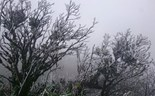 Snow returns to Vietnam's northern highlands