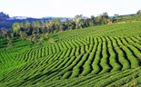 The green lines of Da Lat