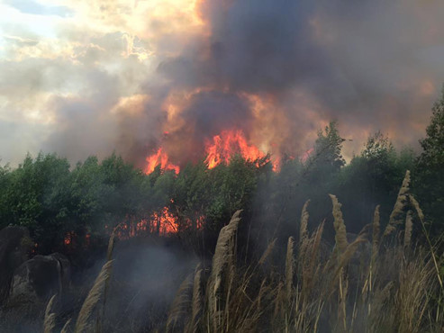 Barbecue May Have Caused Forest Fire In Southern Vietnam Police Society Thanh Nien Daily