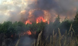Barbecue may have caused forest fire in southern Vietnam: police