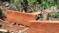 5 Vietnamese arrested in Taiwan for illegal logging: report