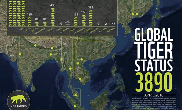 An infographic by the World Wildlife Fund shows tiger status around the world.