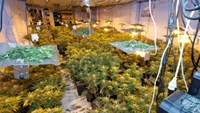 Vietnamese grower at $4 mil cannabis farm jailed in UK