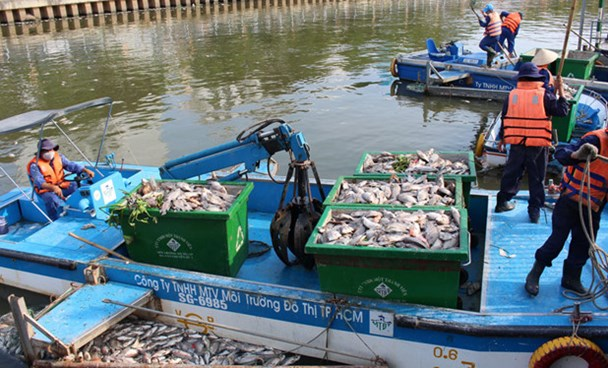 Environment workers pick up dead fish from the Nhieu Loc-Thi Nghe Canal in Ho Chi Minh City May 17, 2016. Photo: Duc Tien/Thanh Nien