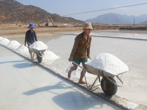 Men harvest salt at a field in Ninh Thuan Province in central Vietnam. Photo: Thien Nhan