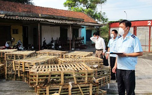 Living cats seized in Quang Ninh Province. Photo courtesy of Quang Ninh Customs