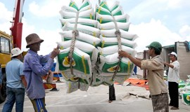 Thailand clearance sale puts Vietnam rice exports on hold