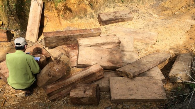 Pieces of rare timber Fujian cypress found in Quang Nam Province. Photo provided by police
