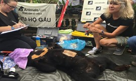 Young sun bear rescued from caged life in northern Vietnam