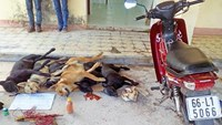 2 theft suspects nabbed with 6 dead dogs in southern Vietnam