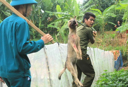 Vietnamese called on to quit eating dog meat amid rabies outbreak