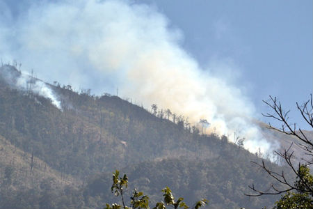 Forest fire put out in Vietnam national park